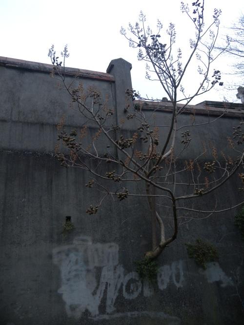 arbre-mur-cimetierre