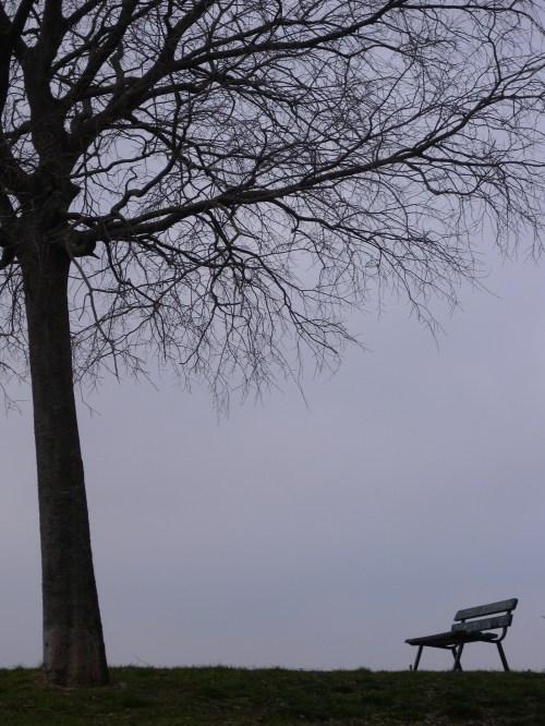 Un banco con su árbol. A bench with his tree