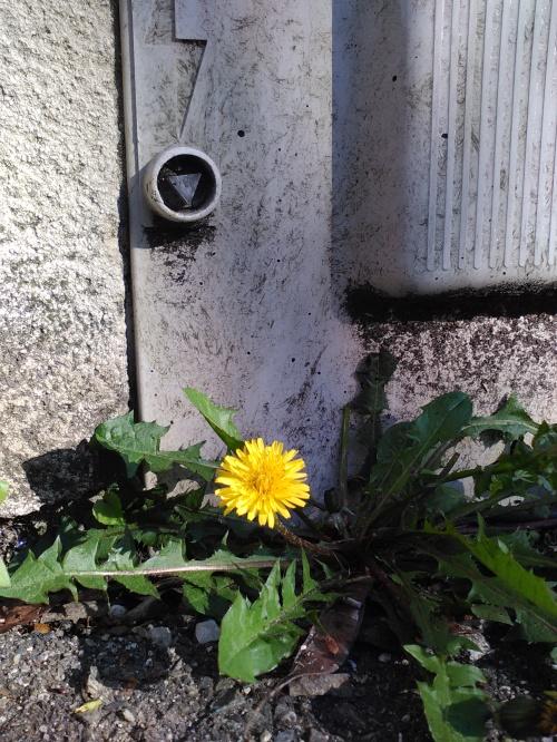 Fleur de pavé 10