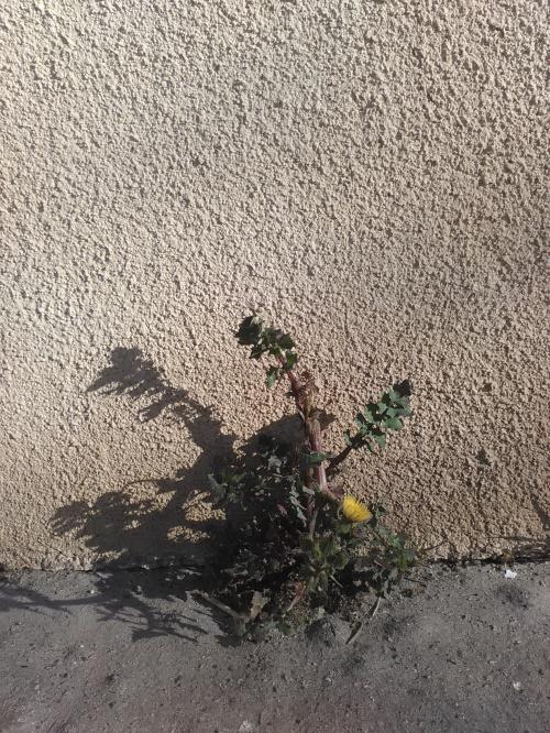 fleur de pavé 14