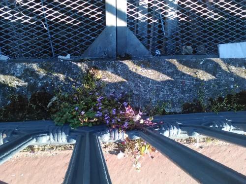 fleur de pavé 16